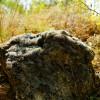 Кукушкин лён - мох, которым утепляли русские, бревенчатые избы